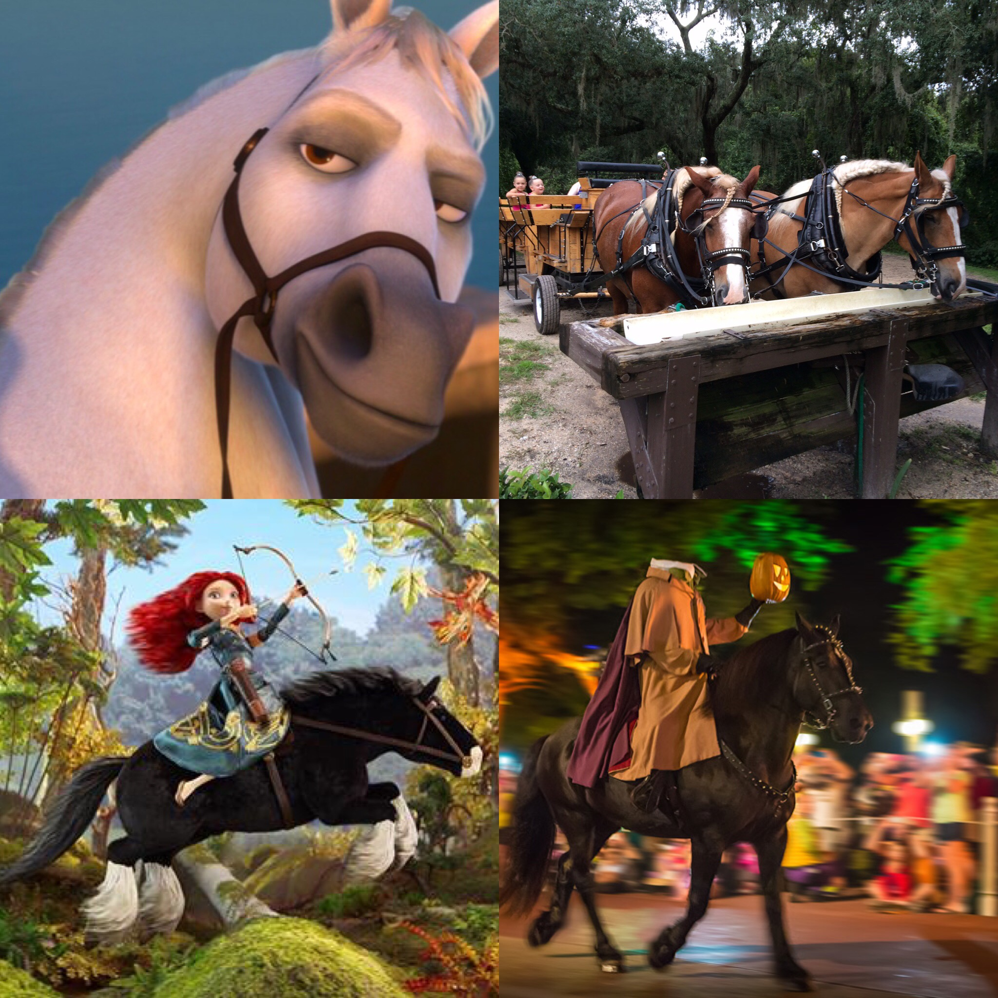 Disney's Tri-Circle-D Ranch Experience - American Horse Publications