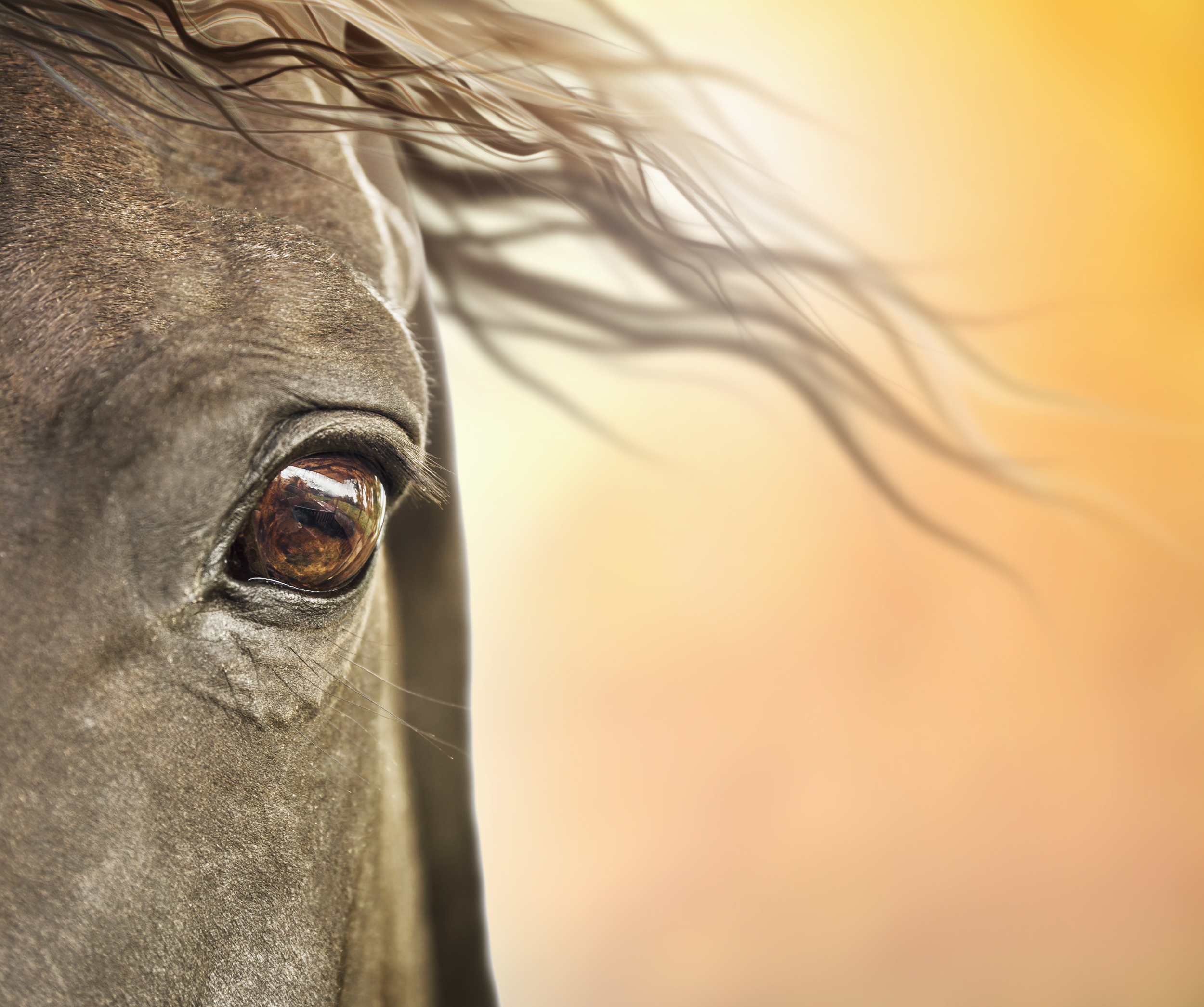 Nominations Open for the 2019 Equine Industry Vision Award